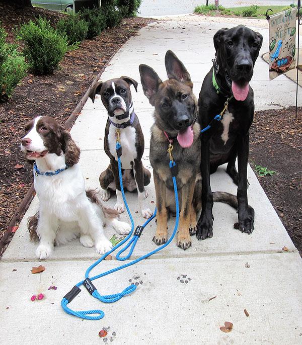 Carolina Dog Training Canine Board and Train Programs