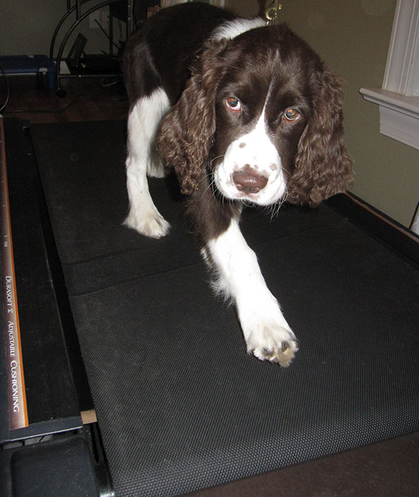 how to train dog to run on treadmill